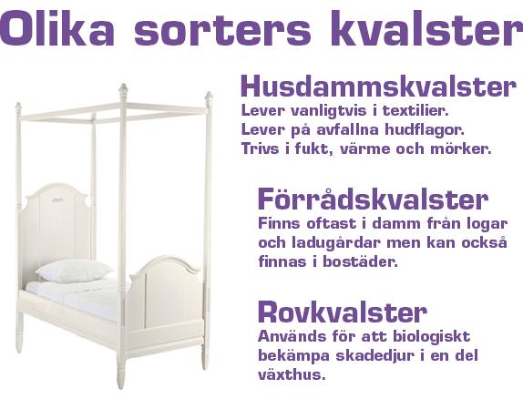 kvalster i sängen bett