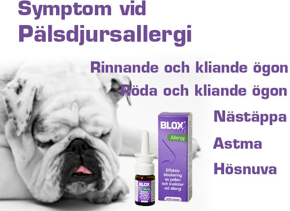 allergisk mot katt test